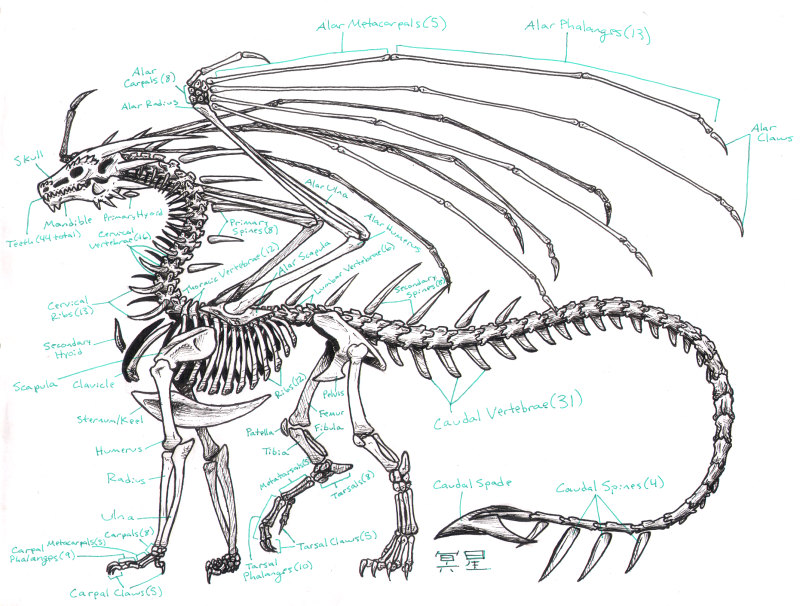 Dragon bone, xương rồng, cấu tạo rồng, dragon