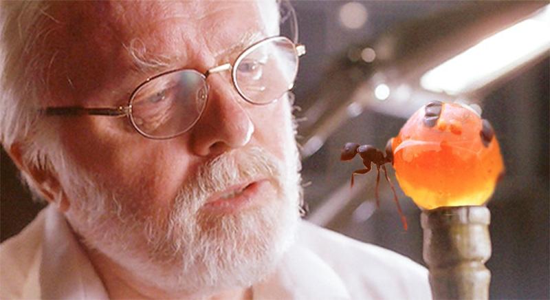 chiếc bụng của kiến mật có thể đạt tới kích thước bằng một quả nho