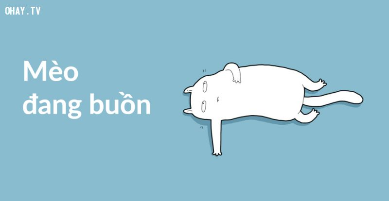 ảnh mèo buồn,truyện tranh,mèo cưng