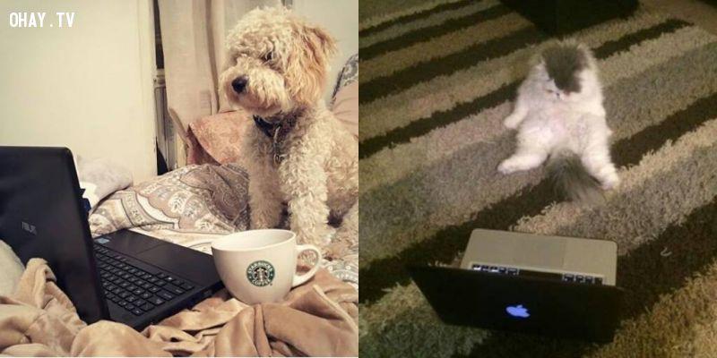 ai bảo cún và mèo không biết truyền thông