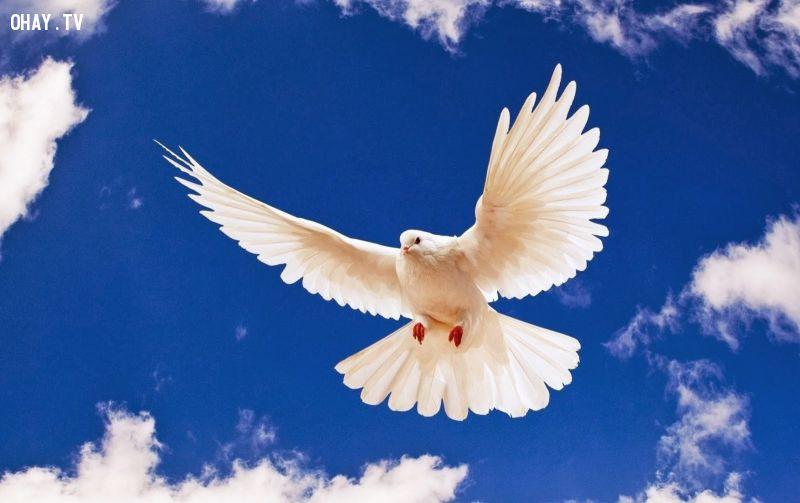 ảnh Sara Jadid,UPU,Thông điệp hòa bình,khủng bố