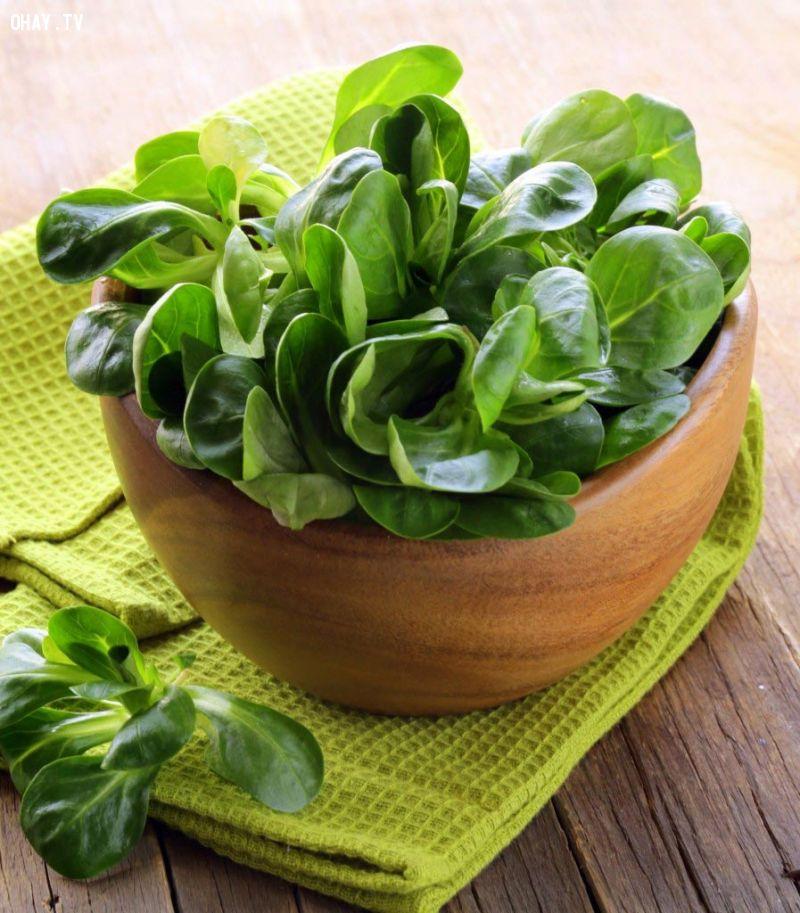 10 thực phẩm nên ăn mỗi ngày: Rau chân vịt