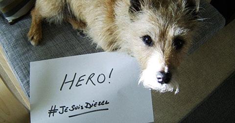 Hàng trăm chú chó trên thế giới bày tỏ lòng tiếc thương với chú chó anh hùng Diesel