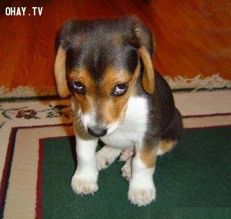 ảnh cún dễ thương,cún cưng,chó cưng