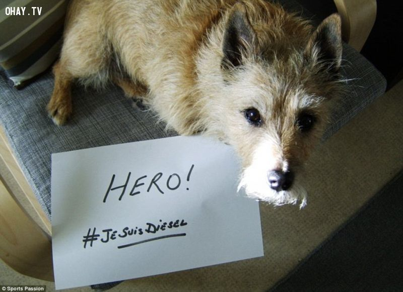 ảnh chú chó diesel,chú chó anh hùng,chó trung thành,loài chó,chó chăn cừu