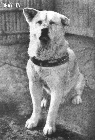 ảnh vật nuôi,Hachiko,thú cưng,trung thành