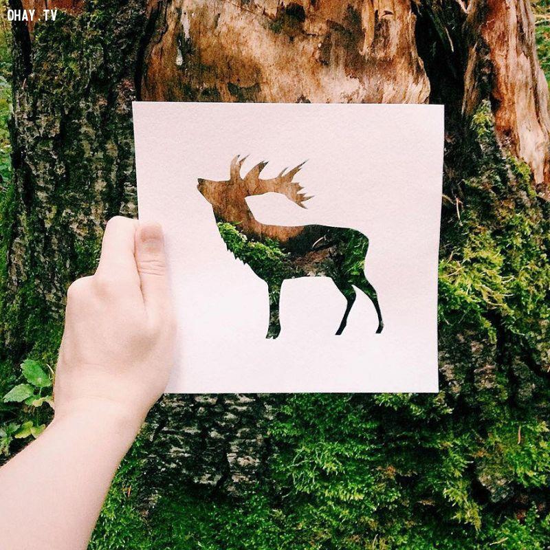 ảnh nghệ thuật cắt giấy,Nikolai Tolstyh