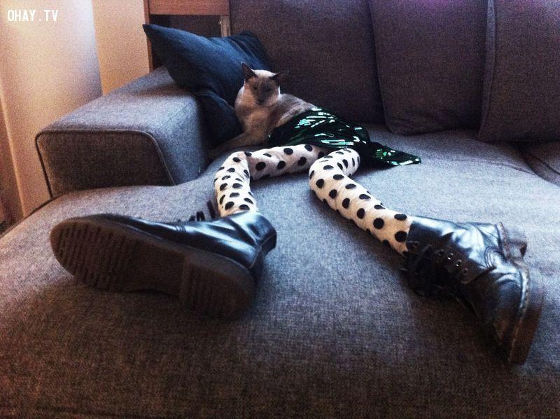 ảnh chân dài,thú cưng,loài mèo