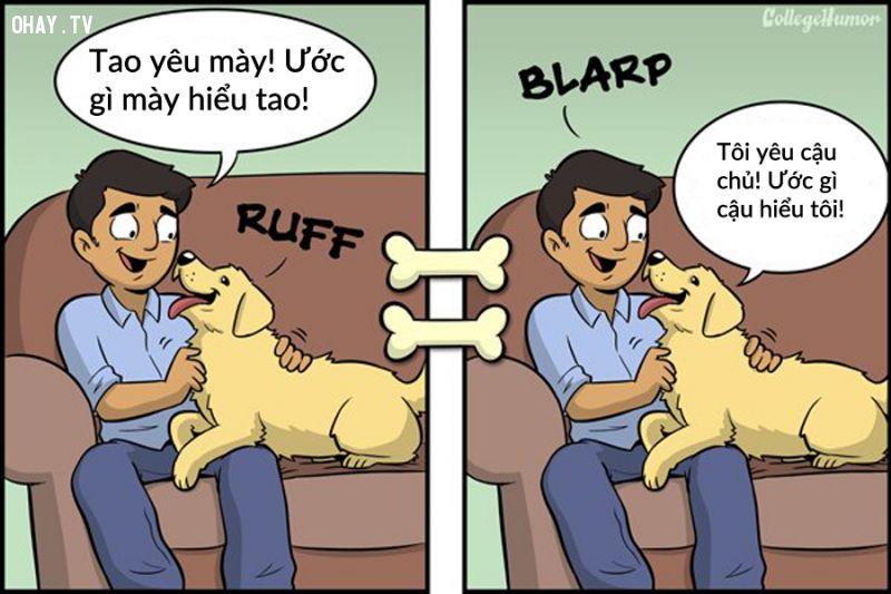 chó và chủ
