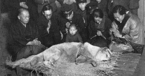 Hình ảnh hiếm hoi về chú chó trung thành Hachiko