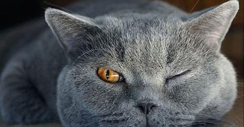 9 loài động vật khi ngủ luôn mở MỘT MẮT
