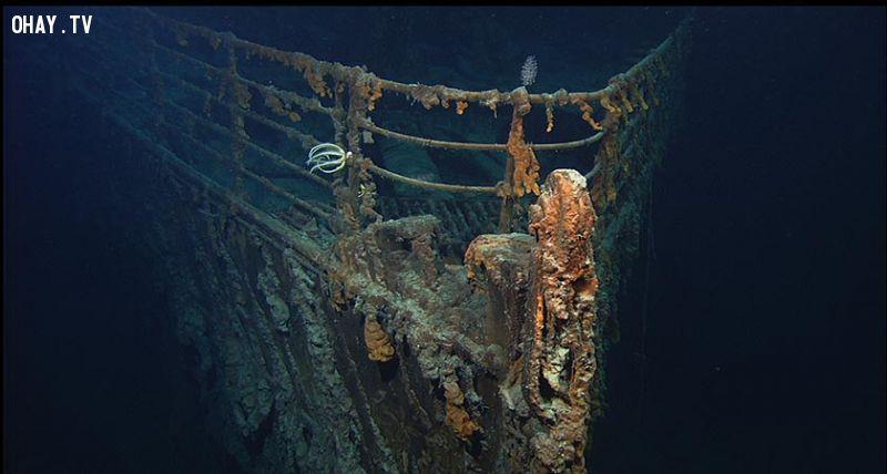 ảnh titanic,tàu titanic,có thể bạn chưa biết,fact
