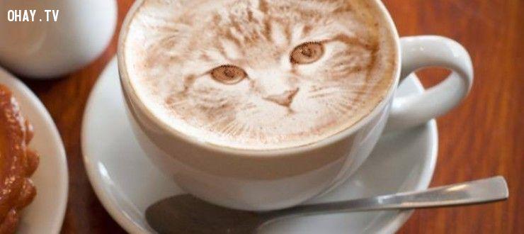Ly cà phê có hình mèo