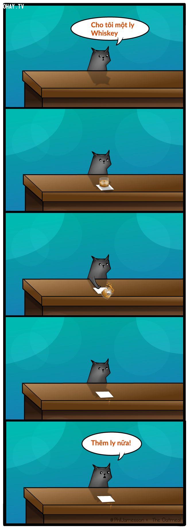 ảnh mèo hài hước,mèo vui nhộn