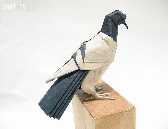 Chim bồ câu Origami