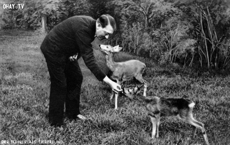 Hitler cho nai ăn