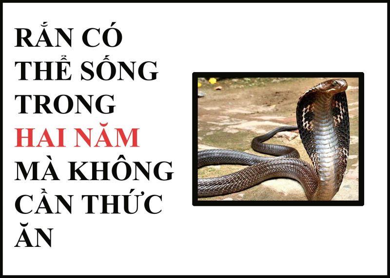 ảnh loài rắn,có thể bạn chưa biết,fact,điều thú vị về rắn