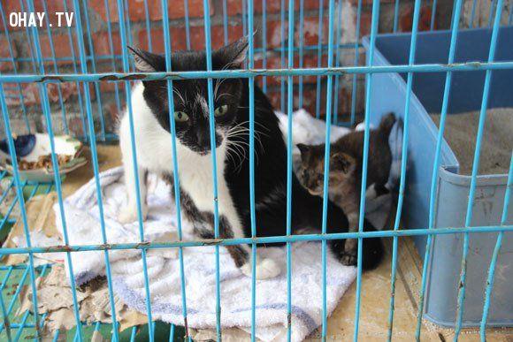 ảnh làng mèo,đài loan,du lịch đài loan,loài mèo,mèo cưng