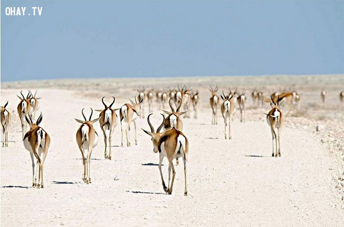 ảnh động vật di cư,động vật,thế giới động vật
