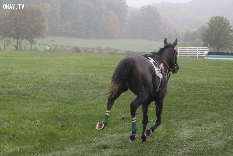 Ngựa bỏ chạy