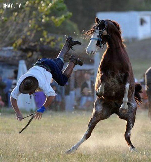 Té khỏi lưng ngựa