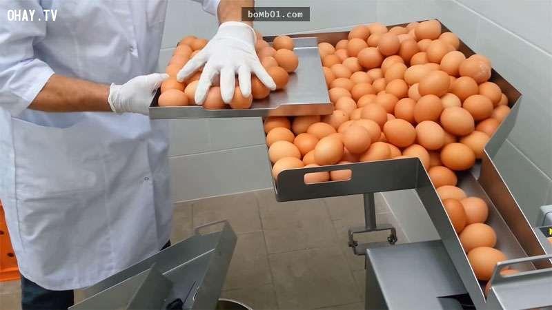 ảnh máy tách trứng,tách lòng trắng lòng đỏ,máy móc,sản phẩm hay,sản phẩm độc đáo