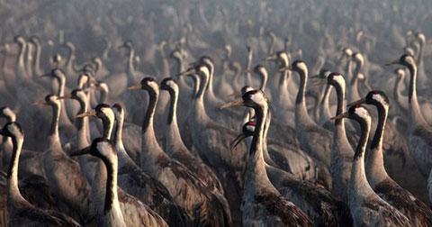 Những cuộc di cư hoành tráng của thế giới động vật