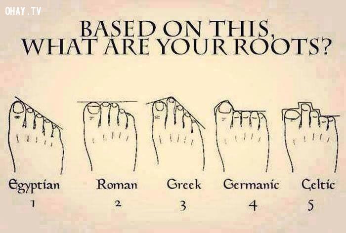 ảnh hình dạng bàn chân,tổ tiên,bàn chân