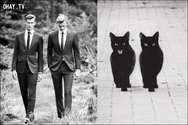 ảnh đàn ông,mèo cưng,mèo hài hước