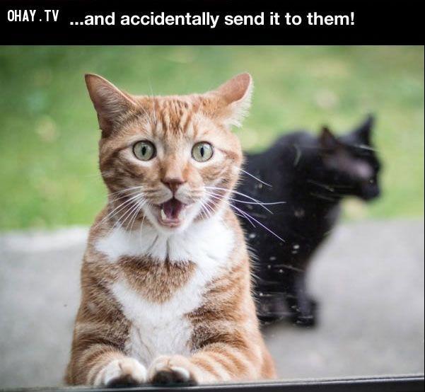 ảnh dân công sở,mèo cưng