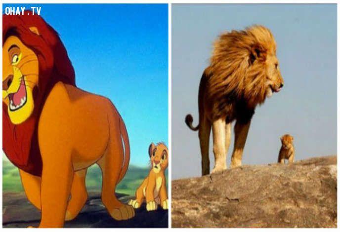 ảnh the lion kinh,vua sư tử,phim hoạt hình disney,phim hoạt hình,disney