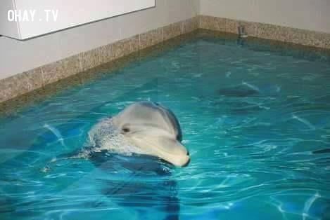 Bể bơi trong nhà - nhìn vậy mà không phải vậy