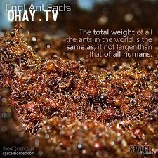 ảnh con người,sự thật điên rồ,có thể bạn chưa biết,fact