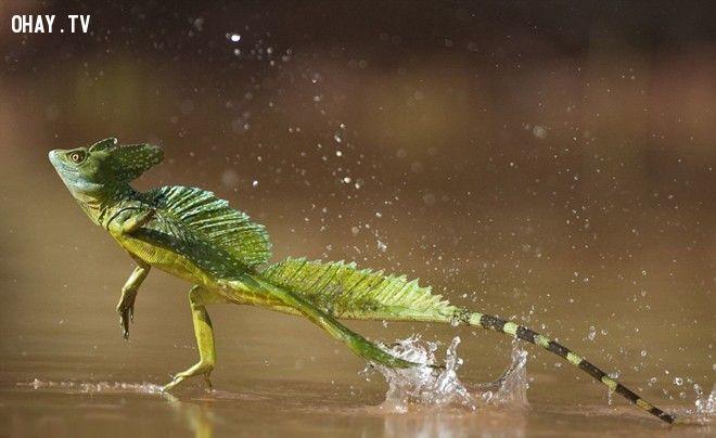 ảnh sinh vật dễ thương,động vật dễ thương,dễ thương,động vật xinh đẹp