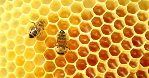 8 cách đơn giản để phân biệt mật ong thật giả!