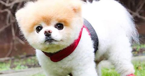 Ngắm nhìn những chú chó, mèo đáng yêu và nổi nổi tiếng trên thế giới
