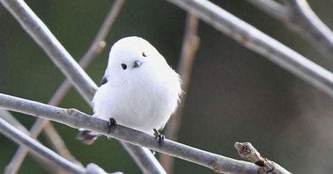 Những sinh vật dễ thương khiến bạn phải cảm thán trước sự kỳ diệu của tự nhiên