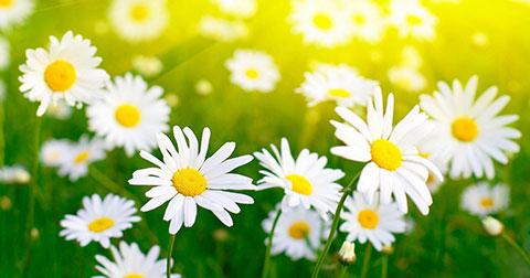 Bông hoa tháng sinh nói gì về bạn?