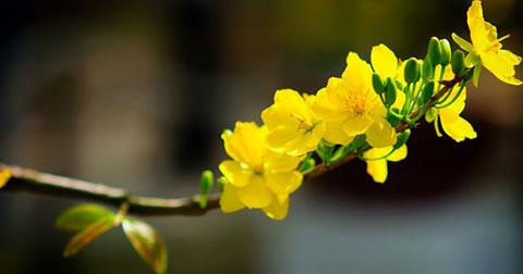 Những bí mật chưa từng kể về hoa