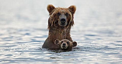 24 khoảnh khắc dễ thương nhất giữa cha mẹ và con cái trong thế giới động vật