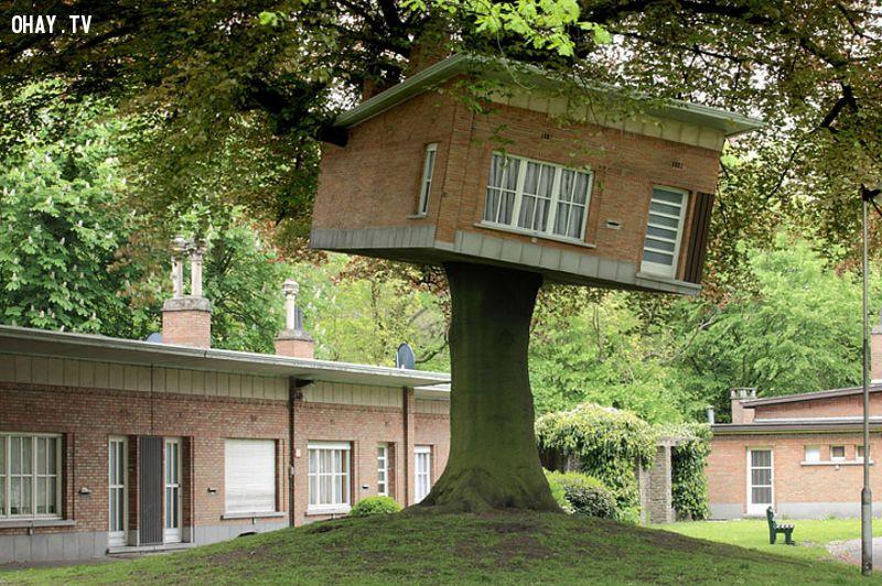 ảnh nhà cây,kiến trúc độc đáo,kiến trúc lạ