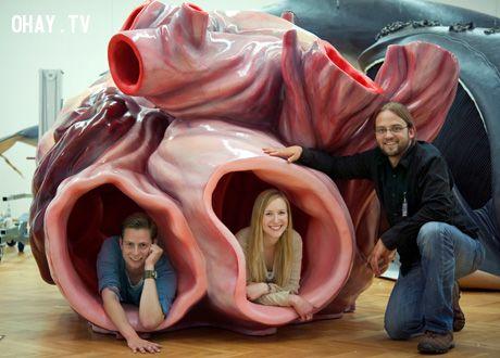 Mô hình tim của Cá voi xanh