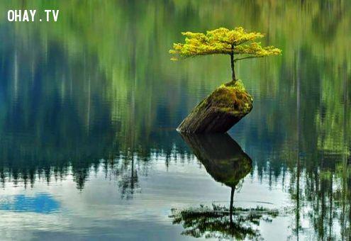 ảnh sức sống mãnh liệt,hình ảnh truyền cảm hứng,mất niềm tin vào cuộc sống,sống tốt