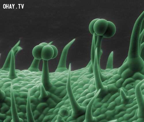 ảnh ảnh qua kính hiển vi,kính hiển vi