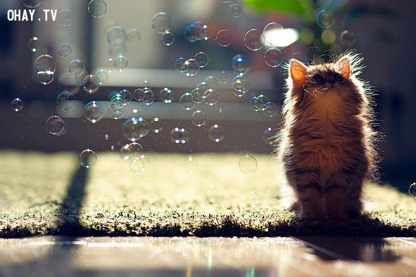 Mèo con suy tư