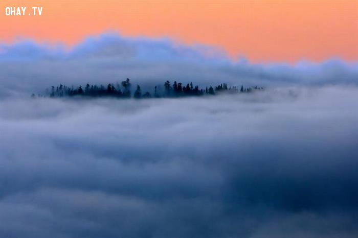 Rừng trên mây