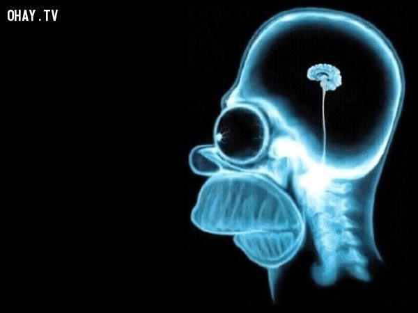 ảnh bộ não,có thể bạn chưa biết,cơ thể con người,fact