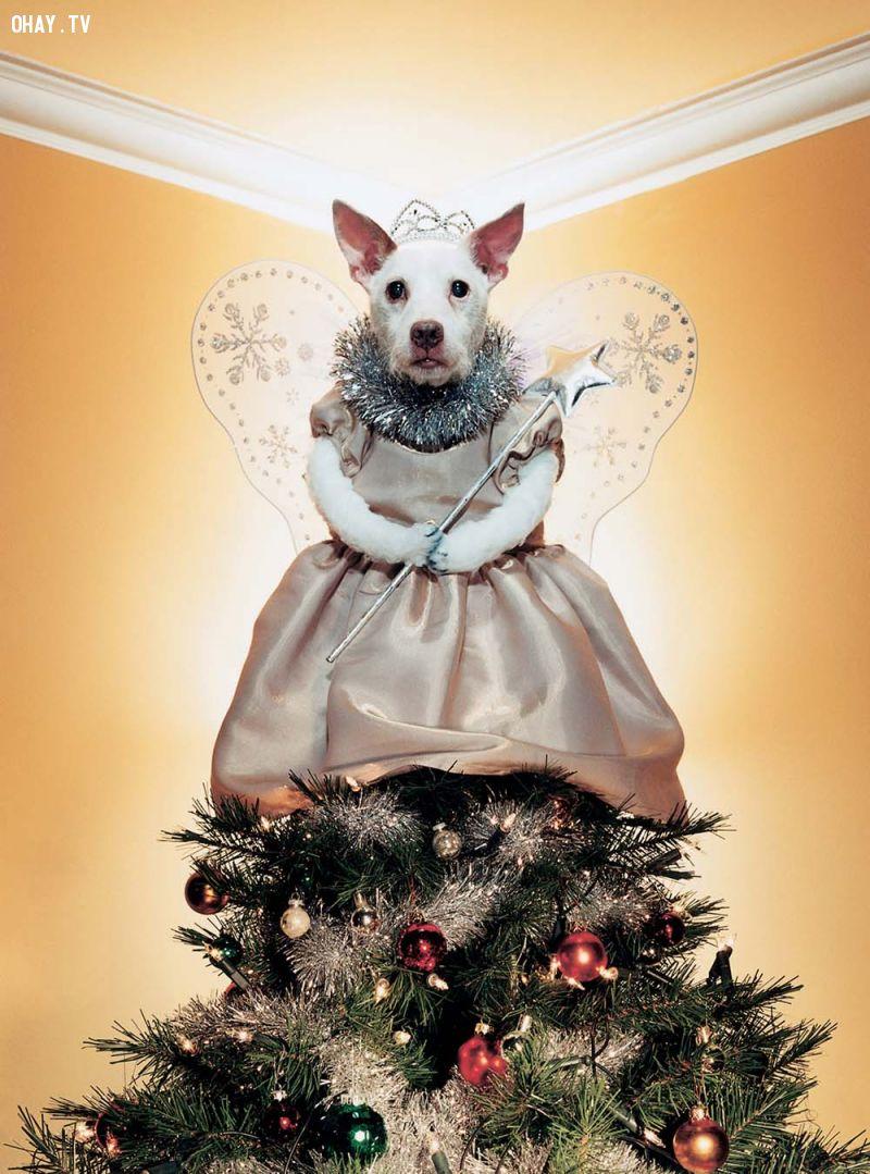 ảnh Peter Thorpe,cún cưng,chó cưng