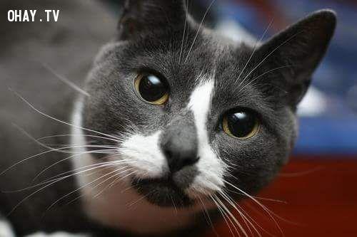 ảnh động vật dễ thương,thú cưng,chó mèo nổi tiếng,động vật nổi tiếng