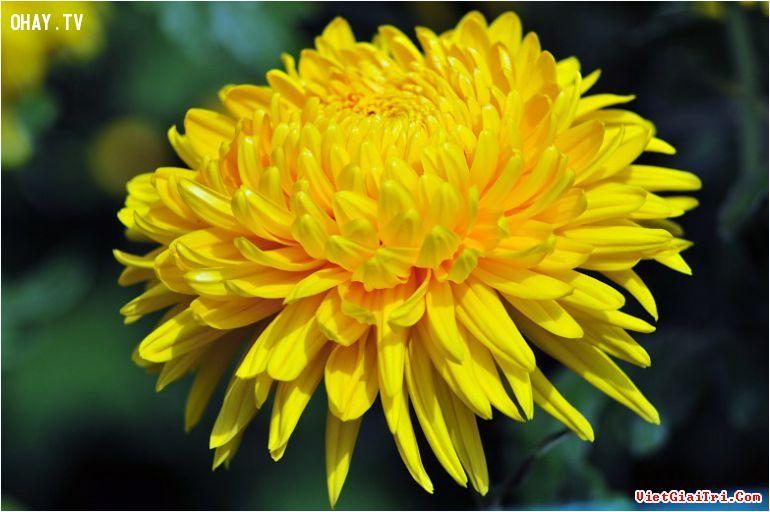 ảnh bông hoa tháng sinh,trắc nghiệm tính cách